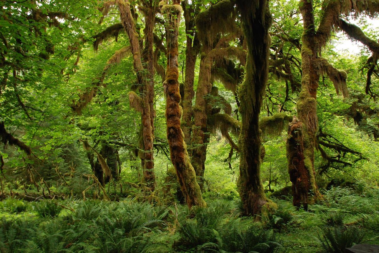 nature, landscape, green