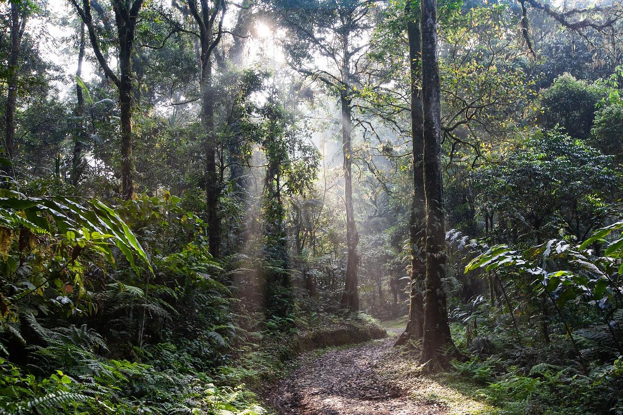 landscape, rainforest, lane